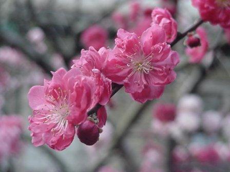 Delaware State Flower