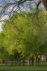 North Dakota state tree