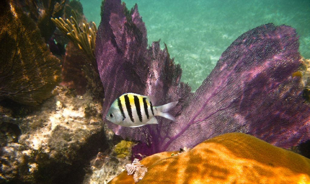 Sea life at  Dry Tortugas National Park